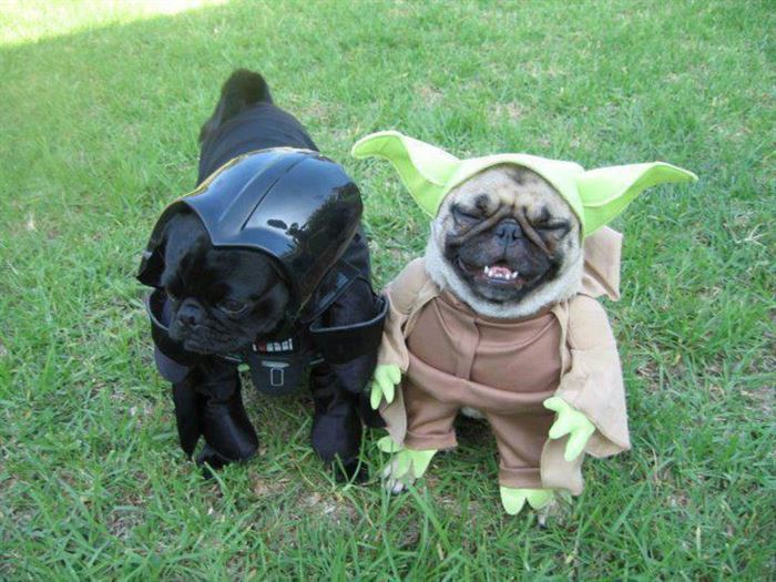 Darth-Vader-and-Yoga-Dogs
